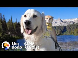 Service Dog Wasn't Playful — Until He Met His Kitten Sister | The Dodo Odd Couples - YouTube